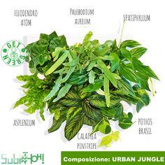 Urban Jungle Plant Leaves