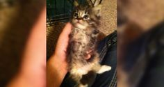 Cat Born with Two Legs Goes from Lying on Her Back to Running on Two