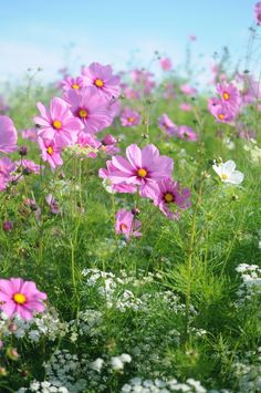 Garden Idea: Plant A Meadow!