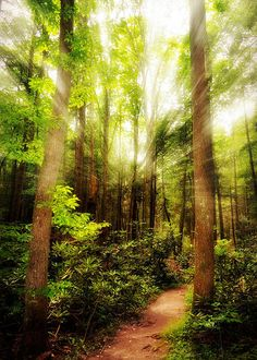 Spiritual Awakening  Print By Lj Lambert http://fineartamerica.com/products/spiritual-awakening-lj-lambert-art-print.html