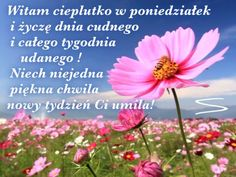 Kartka pod tytułem 🌸 Dzień dobry w poniedziałek! Happy Sabbath, Good Morning, Plants, Pictures, Nova, Google, Polish, Happy Saturday, Buen Dia