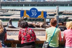 Sea-lion-watching people or people-watching sea lions at Pier 39. Image by Kārlis Dambrāns / CC BY 2.0