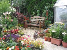My Backyard Paradise