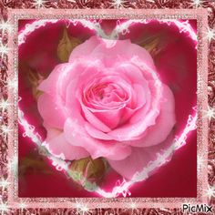 See the PicMix a rose for a special friend belonging to on PicMix. Flowers Gif, Love Flowers, Beautiful Gif, Beautiful Roses, Roses For Her, Kristen Stewart Pictures, Animated Heart, Happy Birthday Video, Love You Gif