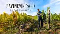 Welcome to our family-run organic and biodynamic winery in the heart of Niagara wine country! Visit us today to sip and dine in the vineyard! Restaurant Marketing, Toronto Life, Chicken Livers, In The Heart, Wine Country, Weekend Getaways, Vineyard, Organic, Brainstorm