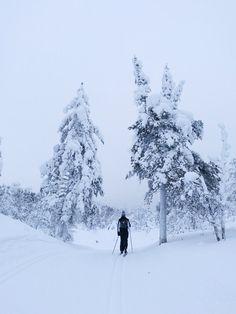 Hiihtoretki Lapissa Skiing in Lapland, Finland