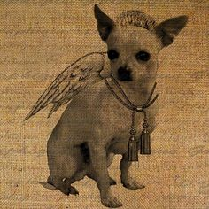 Looks like my chihuahua, Valentine, that I had in college