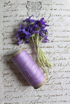 Nosegay of Violets, a Spool of Lavender coloured Cotton, displayed on a Manuscript ....