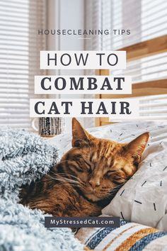 Feeling overwhelmed by the amount of cat hair your cat sheds? Cat hair can be frustrating. It sticks to your couch, clings to your clothes, and screams 'Cat Lady' to everyone in your Zumba class. Learn simple tips to clean your home and combat cat hair. | #CatHair #CatFur #MyStressedCat #Cleaning #housecleaning Zumba, Cat Care Tips, Pet Care, Pet Tips, Living With Cats, Cat Info, Cat Urine, Urine Odor, Cat Shedding