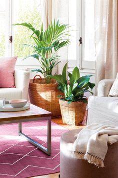 00436619. Plantas en cestas de mimbre junto a sofá y alfombra fucsia 00436619