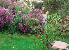 Asters d'automne : 3 compositions, en potée ou en massifs - Mettre en scène les asters au jardin :