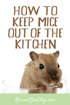 We often have mice making their way into the house to find a warm place for…