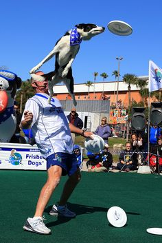 Fun Fact: I love playing ultimate frisbee. Unfortunately my ups are not quite as high as this dog's #jealous