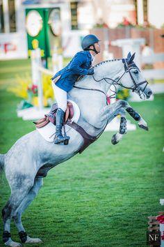 hunter jumper photography Horses – Art Of Equitation Hunter Jumper, Pretty Horses, Beautiful Horses, Kent Farrington, English Riding, Equestrian Outfits, White Horses, Show Jumping, Horse Girl