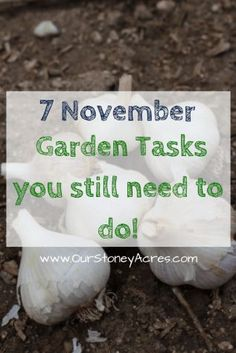 Here's a list of 7 November Garden Tasks you still need to get done this month.  Get out in the garden and finish these jobs before the snow files!! Winter Vegetables, Planting Vegetables, Organic Vegetables, Growing Vegetables, Growing Tomatoes, Growing Plants, Gardening For Beginners, Gardening Tips, Gardening Quotes