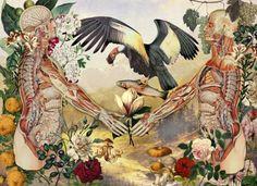 O argentino Juan Gatti  faz belíssimas ilustrações que misturam anatomia humana, plantas e animais exóticos.   Além de ser fotógrafo e de...