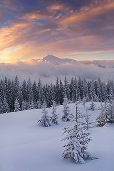 winter scene   snow  Winter Wonderland   #MichaelLouis - www.MichaelLouis.com