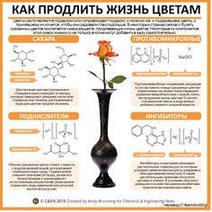 Хотя некоторые и говорят, что подарить настоящему любителю цветов букет из срезанных роз или лилий — это все равно, что подарить кошатнику чучело котика, букеты покупают, их дарят (иногда дар…