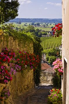 We love this beautiful view of France's wine country via Smh.