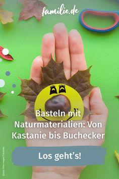 """Kastanien, Eicheln, Bucheckern, Blätter und Tannenzapfen - das sammeln Kinder im Herbst tonnenweise. Doch was tun mit all dem """"Naturmaterial""""? Ganz klar: verbasteln! Hier kommen unsere Vorschläge. #selbermachen #selbstgemacht #DIY #doityourself #basteln #schere #kinder #familie #family #gemeinsam #freizeit #hobby #alltagmitkindern #lebenmitkindern #familienleben #vereintimchaos #homemade #kleinkind #bunt #spaß #children #anleitung #tutorial #sogehts #kastanien #naturmaterialien #herbst #eicheln Kindergarten, Pine Cones, Autumn Decorations, Kindergartens, Preschool, Preschools, Pre K, Kindergarten Center Management, Day Care"""