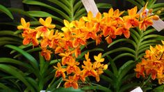Organized by     : OSM ( Orchid Society of Malaysia) Date                 : 23 rd November 2012 - 2 nd November 2012 Time             ...