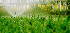 9 Ways to use less water in the garden.