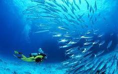 Submarinismo en Mexico