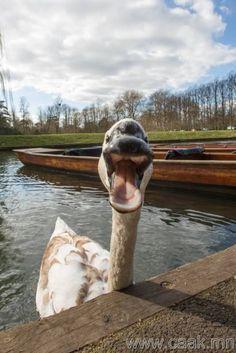 """I'm coming after ya ...so ya better paddle fast!"""