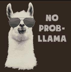 Really though, it's no prob-llama. Lol