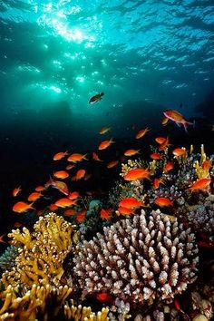Tropical fish on the reef.