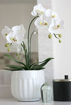Flowers for the home White Orchids, Spring Home, Cut Flowers, Interior Design Inspiration, White Ceramics, Floral Arrangements, Glass Vase, Sweet Home, Pretty