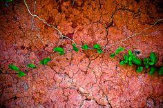 Clay on the Shore of Lake Lanier, Georgia by Matt K. Lehman, via Flickr