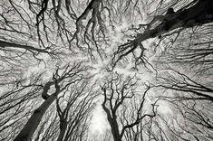 nature2 Árboles
