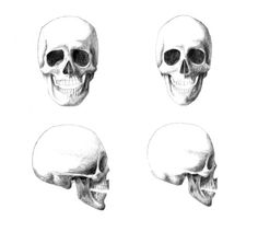 humanphysiology / The-differences-between-a-man-and-woman's-skeleton