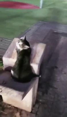 Funny Animal Clips, Funny Animals, Funny Memes, Lol, Humor, Cats, Gatos, Humour, Funny Animal