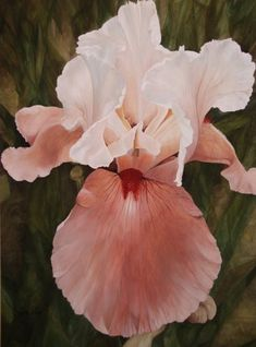 The Pink Lady Iris watercolor print by Laurie Rohner Iris Flowers, My Flower, Flower Power, Pink Flowers, Planting Flowers, Amazing Flowers, Beautiful Flowers, Watercolor Flowers, Watercolor Art