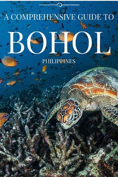 Travel and get inspired with this comprehensive and complete guide to Philippine's best destination: Bohol