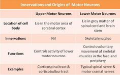 upper motor neuron vs lower motor neuron - Google Search