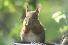 Squirrel found a treat