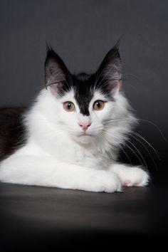 those ears, those eyes