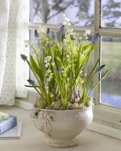 Maiglöckchen in der Pflanzschale -- lily of the valley with grape hyacinth