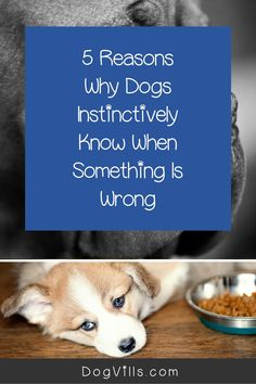 """Why do dogs instinctively know when something is wrong?"" That's a question many dog owners ask when their dogs dislike certain people or warn them about incoming disasters."
