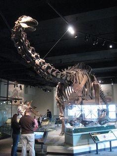 Apatosaurus by Jake T, via Flickr