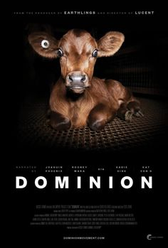 """DOMINION - Documentary Mania: """"The film uses drones, hidden and handheld cameras to expose the dark underbelly of modern animal agriculture, questioning the morality and validity of humankind Grey Gardens Documentary, Documentary Film, Documentary Photographers, Rooney Mara, Joaquin Phoenix, What The Health Documentary, Health Documentaries, Netflix Documentaries, Soundtrack"""