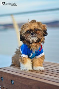 Coco @ the yards 2 by Eric Costley, via 500px. Shih Tzu
