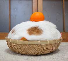 Shiro with an Orange.