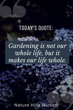 3 gardening garden quotes, garden и garde Gardening For Beginners, Gardening Tips, Gardening Zones, Urban Balcony, Online Plant Nursery, Buy Plants Online, Garden Works, Planting Shrubs, Low Maintenance Landscaping
