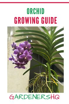 How to Grow the half hardy perennial Orchid , and other Bletilla Plants Genus Members. Orchids like to Grow in the Shade and often have White or Purple flowers. Shade Tolerant Plants, Partial Shade Plants, Ground Orchids, Orchid Seeds, Types Of Orchids, Soil Ph, Hardy Perennials, Tropical Plants, Purple Flowers