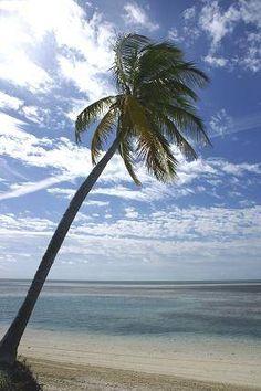 How to Create Beach Decor for Cheap