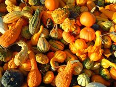 Gourds: Types of Gourds, Growing Gourds, Curing Gourds | Old Farmer's Almanac Outdoor Plants, Outdoor Gardens, Gourd Types, Types Of Pumpkins, Pumpkin Family, Planting Pumpkins, Cucumber Beetles, Strange Fruit, Decorative Gourds